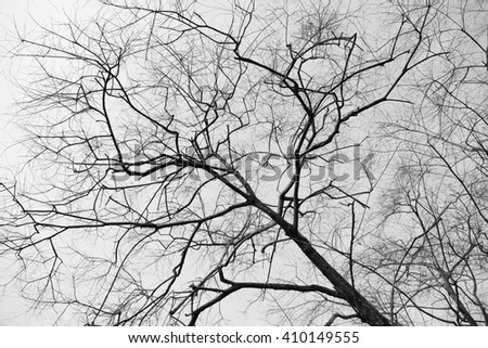 Dry tree branches background, black and white