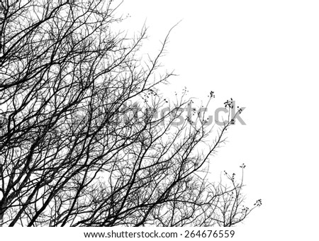 dry tree branches on white background - stock photo