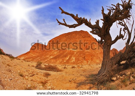 Dry tree in ancient mountains of desert - stock photo