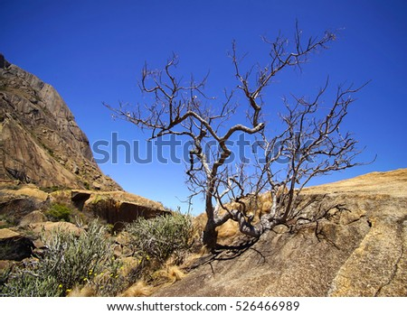 Dry tree in the rocks, Madagascar