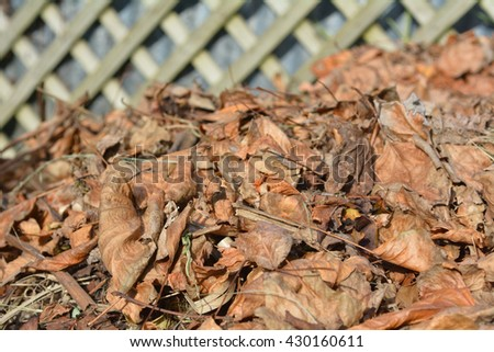 Dry tree leaves in a garden compost in during the Autumn season. - stock photo