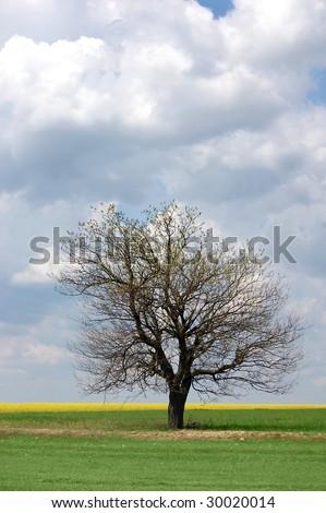 Dry tree near field - stock photo