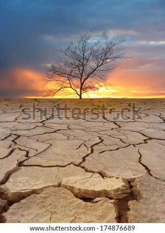 Dry tree on cracked earth. Ecological disaster. Fantastic sunset.