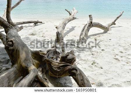 Dry tree on sea coast - stock photo