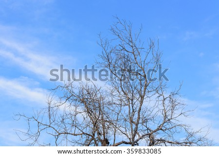 Dry tree on sky background - stock photo