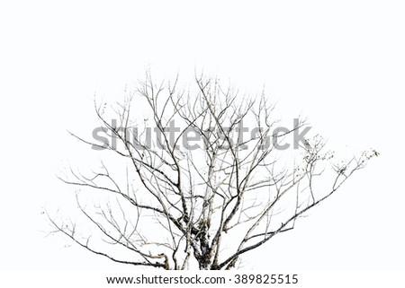 Dry tree on white background - stock photo