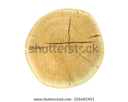 Dry tree stump isolated on white background. Top view. - stock photo