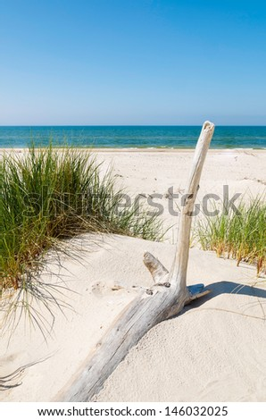 Dry tree trunk grass sand dune beach sea view, Rowy, Baltic Sea, Poland - stock photo