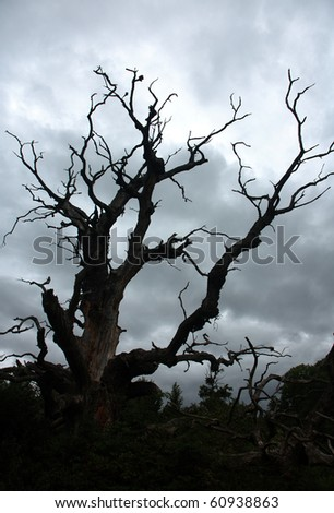 Dry tree under storm sky - stock photo