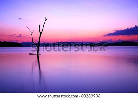 Dry Tree Under Sunset, Western Thailand - stock photo