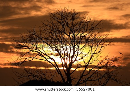 Dry tree with sunset background