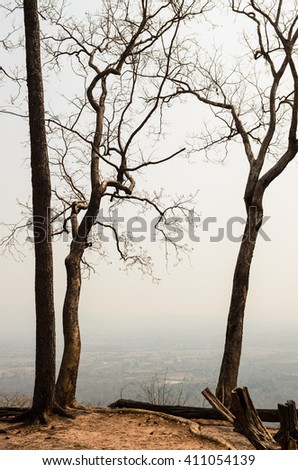 Dry trees in forest on the mountain, tropical forest in summertime. - stock photo