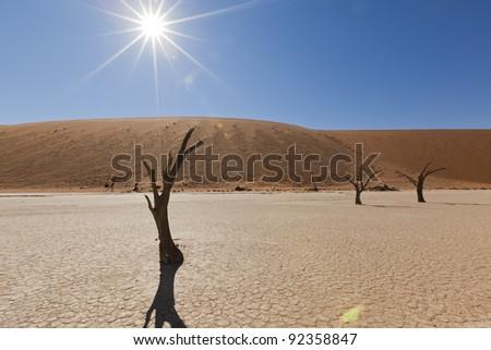 dry trees in Namib desert - stock photo