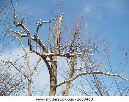 dry trees on blue sky - stock photo