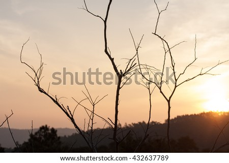 Dry trees with hills behind and sun light - stock photo