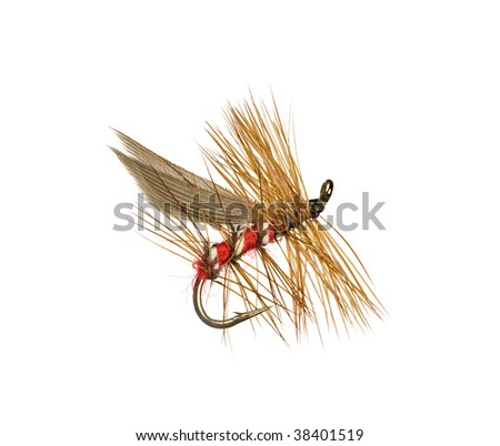 Dry Trout Fishing Fly Isolated on White Background - stock photo