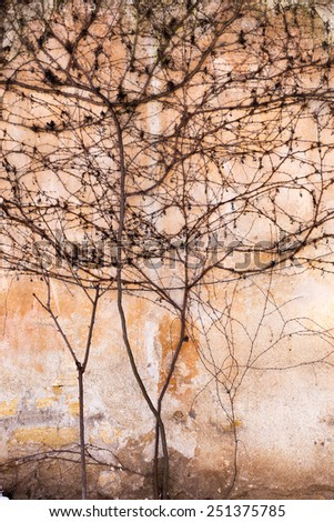 Dry trunks and branches of plants are no leaves on the old stone wall paint strict picturesque creative ornament. Background for your concept or project. Landscape style. Great background or texture.
