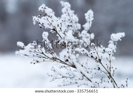 Dry twig covered by fluffy snow, winter background - stock photo