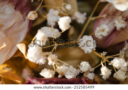 dry vintage small white flowers - stock photo