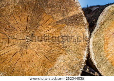Dry woodpile of cut lumber ready for forestry industry - stock photo