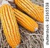 dry yellow corn on straw background - stock photo