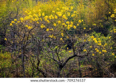 Dry yellow flowers winter season big stock photo royalty free dry yellow flowers in winter season big tree beautiful in nature mightylinksfo