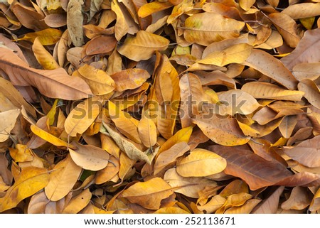 dry yellow leaf background - stock photo