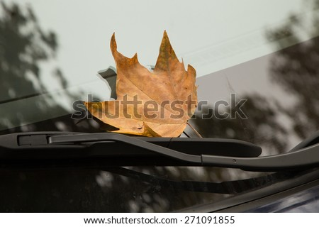 Dry yellow maple leaf on a clear car window, stuck in wiper blade - stock photo
