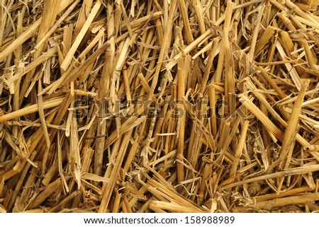 dry yellow straw abstract - stock photo
