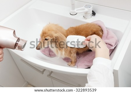 Dryers and brushes and dog