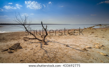 Drying lake and dead tree - stock photo