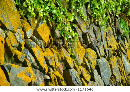 Drystone wall and Ivy - stock photo
