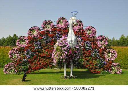 DUBAI, UAE   FEBRUARY 8: Dubai Miracle Garden In The UAE, As Seen