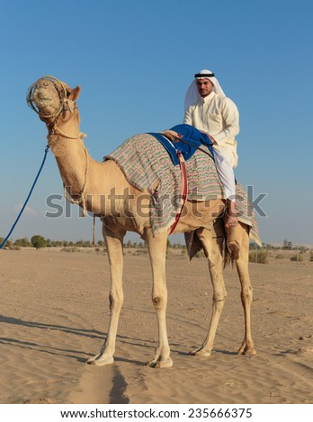 DUBAI, UAE - NOVEMBER 12, 2013: Arab with a camel in the desert  - stock photo