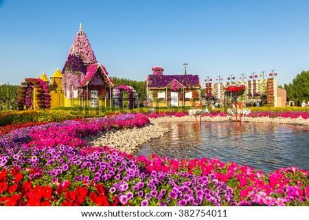DUBAI, UAE - NOVEMBER 24 : Dubai miracle garden with over 45 million flowers in a sunny day on November 24, 2015, United Arab Emirates - stock photo