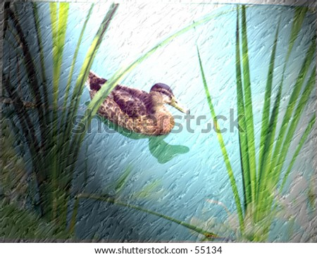 duck at zoo - stock photo