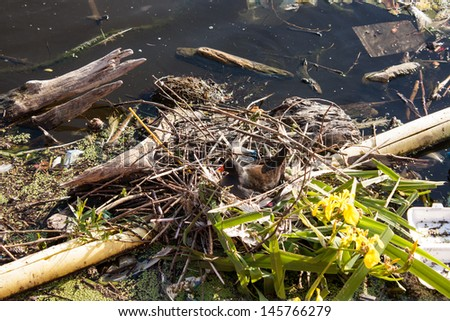 Duck make a nest on recyclable garbage.   - stock photo