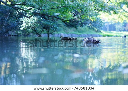 https://thumb7.shutterstock.com/display_pic_with_logo/167494286/748581034/stock-photo-duck-on-the-surface-of-the-water-748581034.jpg