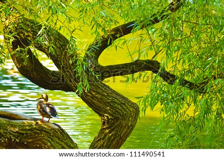 Duck sitting on twirled tree - stock photo