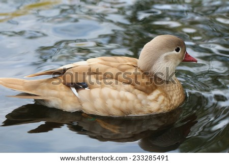 Duck swimming on the water.