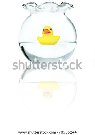 Duckie in aquarium with reflection - stock photo