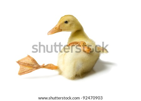 Duckling slipping on white background - stock photo