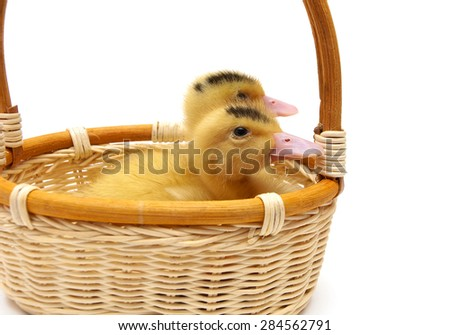 ducklings sitting in a basket on a white background. Horizontal photo. - stock photo
