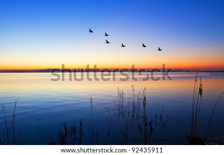 ducks crossing the lake - stock photo