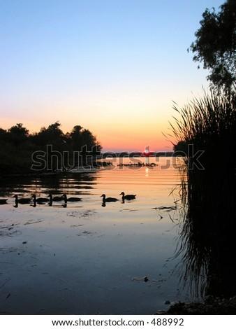 Ducks in a Row - stock photo