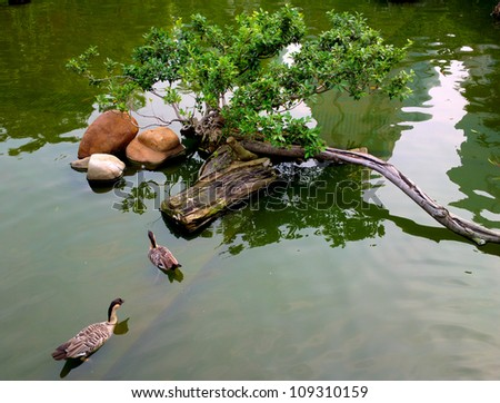 ducks in pond - stock photo