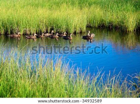 ducks in water of mountain lake - stock photo