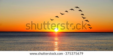 Ducks migrating during sunset over the ocean - stock photo