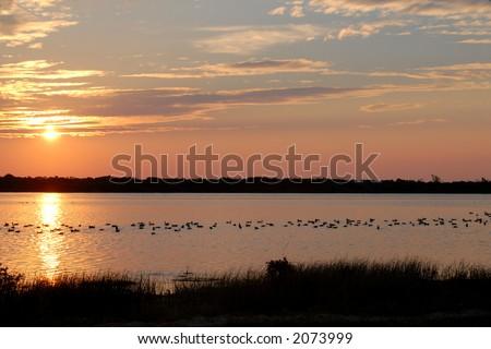 Ducks resting on a Pea Island,North Carolina pond. - stock photo