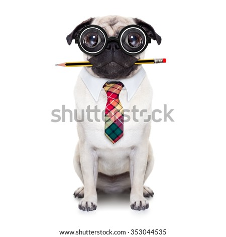 dumb crazy pug dog with nerd glasses as an office business worker with pencil in mouth ,full body ,  isolated on white background - stock photo
